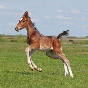 Neonorm Foal